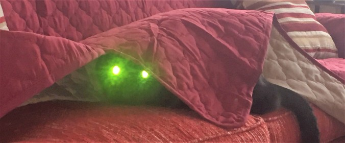 cropped demon cat